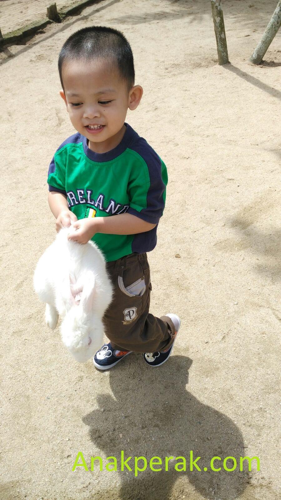 Afiq angkat bunny